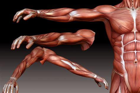 muscle men murphy fantasie 3d art picture 7