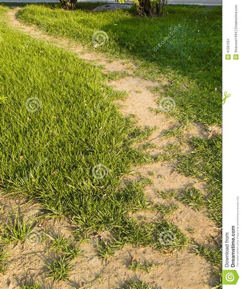 herbal path picture 6