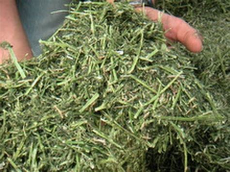 how much alfalfa pellets to feed a goat picture 6