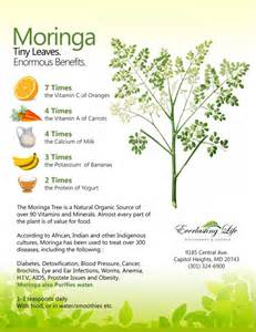 can moringa herbs cure h picture 3