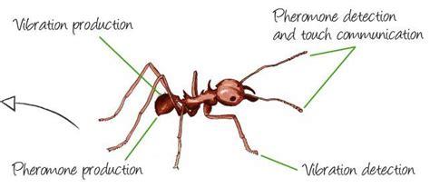 pheromones communication picture 1