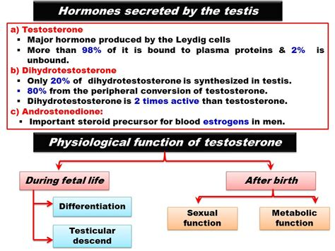 the hormone testosterone functions inside a cell by picture 3