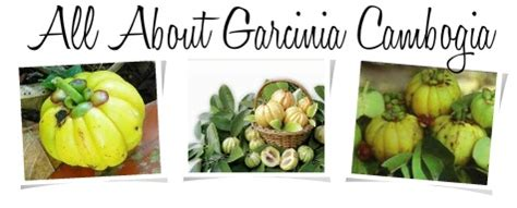 where can i cambogia garcinia in india by picture 2