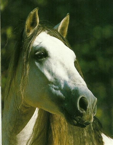 muscle building in horses picture 5