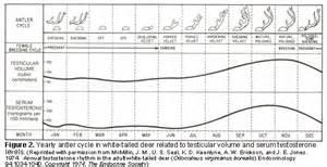 velvet antler penis size chart picture 3