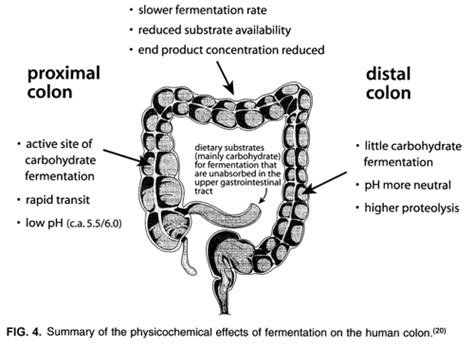 small colon polyp picture 5