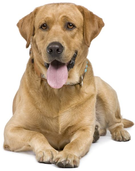 Canine prostate problems in neutered male picture 3