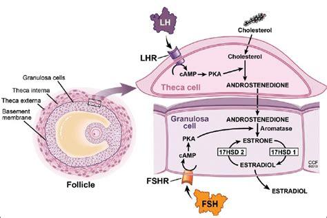 collagen vs cholesterol picture 6