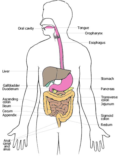 digestive enzymes and weight loss picture 10