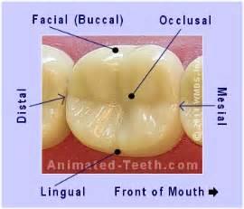cost of teeth veneers picture 11