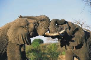african picture 17