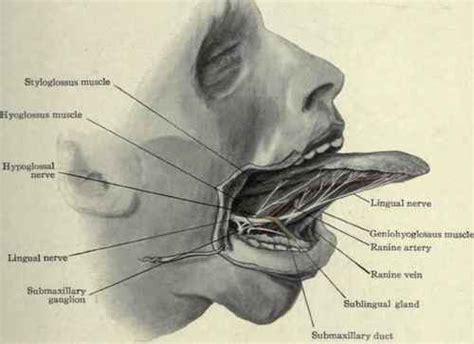 artery in lip picture 11