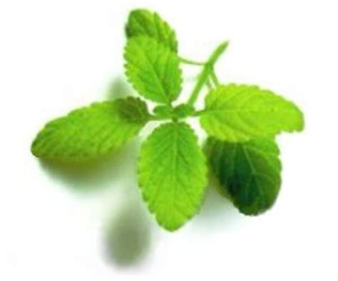 filipino herbal remedies picture 5