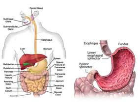 diagnosis of gastrointestinal ulcers picture 13