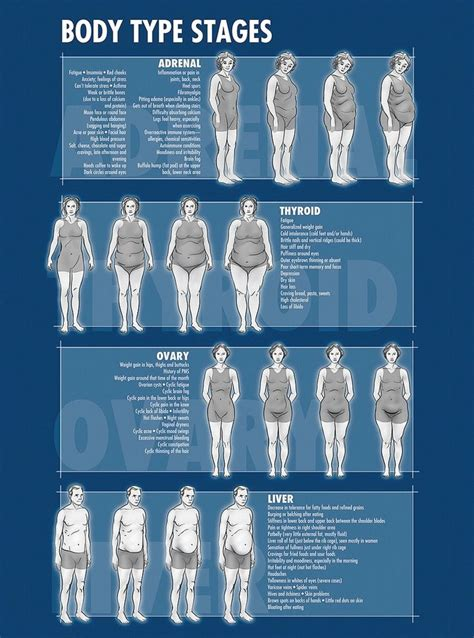body type and weight loss picture 2