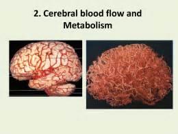 cerebral blood flow and metabolism edvinsson ebook picture 15