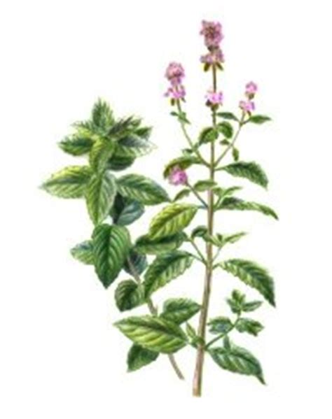 herbal calming picture 1