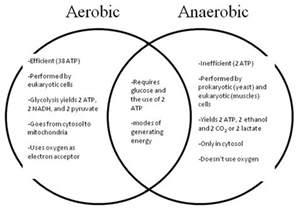 anaerobic picture 5