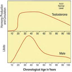 testosterone levels jaw size picture 6
