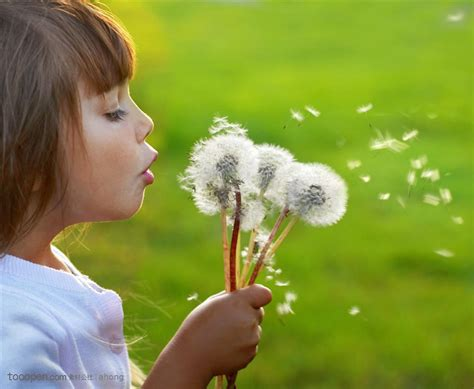 dandelion allergy picture 13