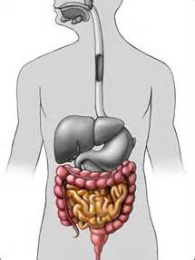 lower gastrointestinal disorders picture 3