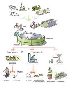 anaerobic digestion picture 9