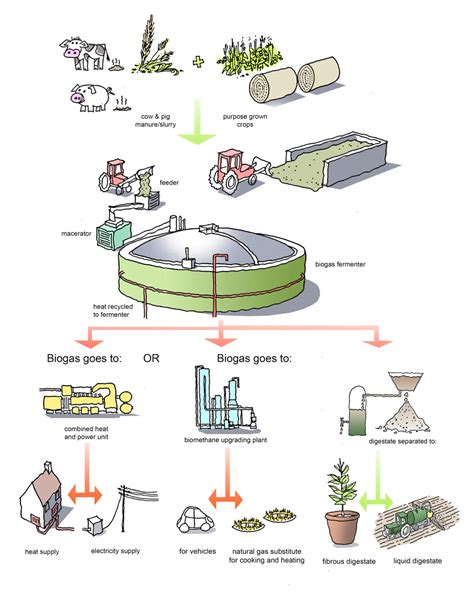 dictionary anaerobic digestion picture 2
