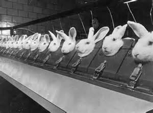 animal testingavon skin care laboratories picture 13