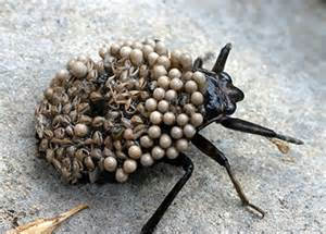 eating spiders while asleep picture 6