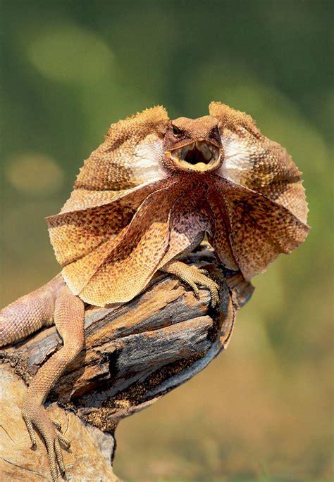 cicada diet picture 14