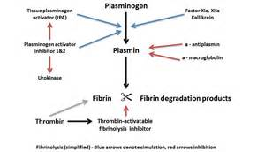 what is the process of fibrinolysis in liver picture 1