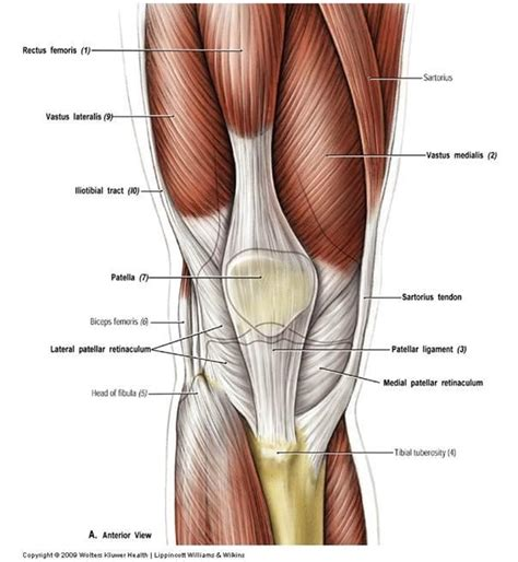 plica knee joint picture 13