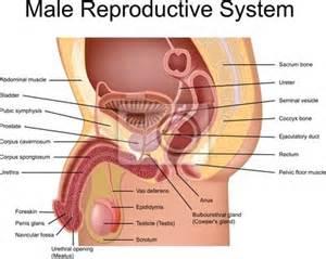 mens sex problems surhet e inzaal picture 13