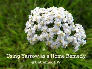 yarrow use picture 9