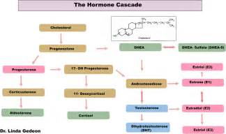 testosterone steroid chart picture 11
