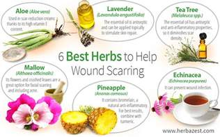 herbs that can help after bladder surgery picture 3
