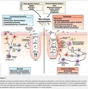 intestinal health picture 3