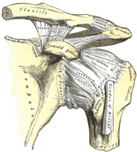 facet joint hypertrophy picture 19