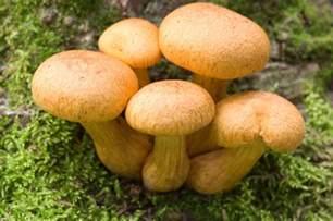fat mushroom head penis stretches picture 9