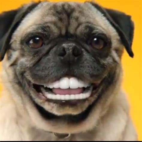 pets teeth picture 1