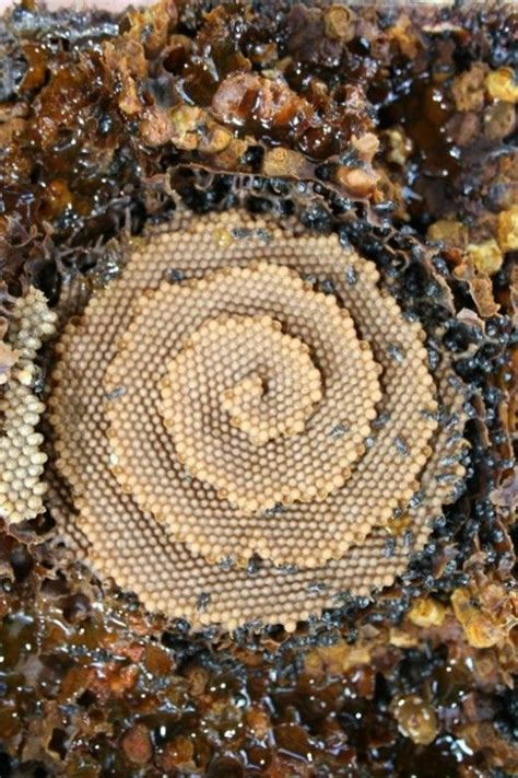 bee hives australia picture 10