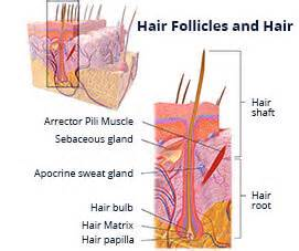 acidify in scalp hair picture 7