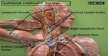 full-body fat tissue/lymphatic cleanse picture 1