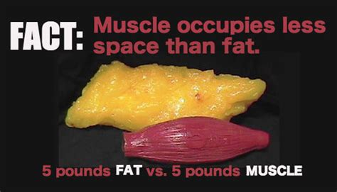 fat pounds vs muscle picture 3
