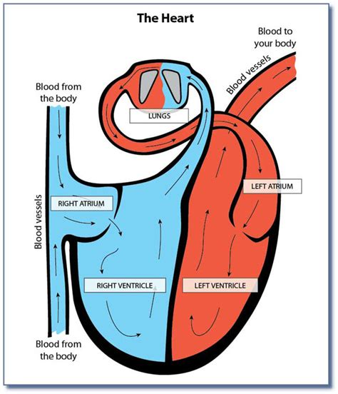 can i buy circu aid for blood circulation picture 16