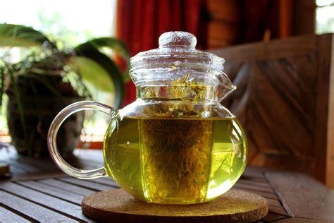 dandelion tea picture 21