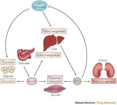 hgh and insulin picture 1