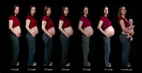 average weight gain by 16 weeks picture 10