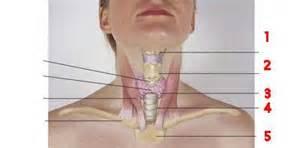 thyroid hot nodules optic nerve damage picture 7