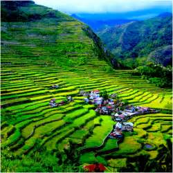 herbal medicines in banaue ifugao picture 2